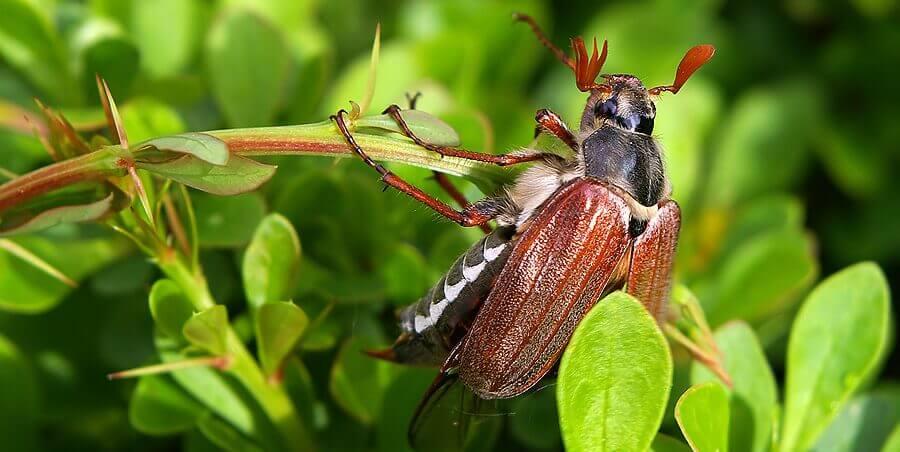 Детям о насекомых. Занятие в форме сказки.
